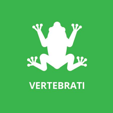 Albo 3 - I vertebrati