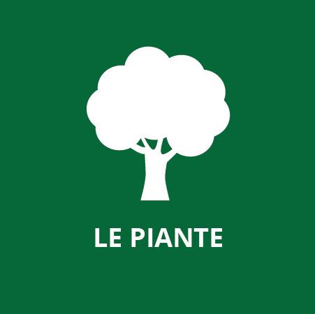 Albo 5 - Le piante